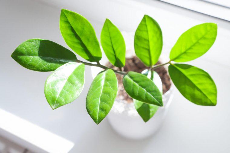 consejos cuidar plantas de interior y exterior