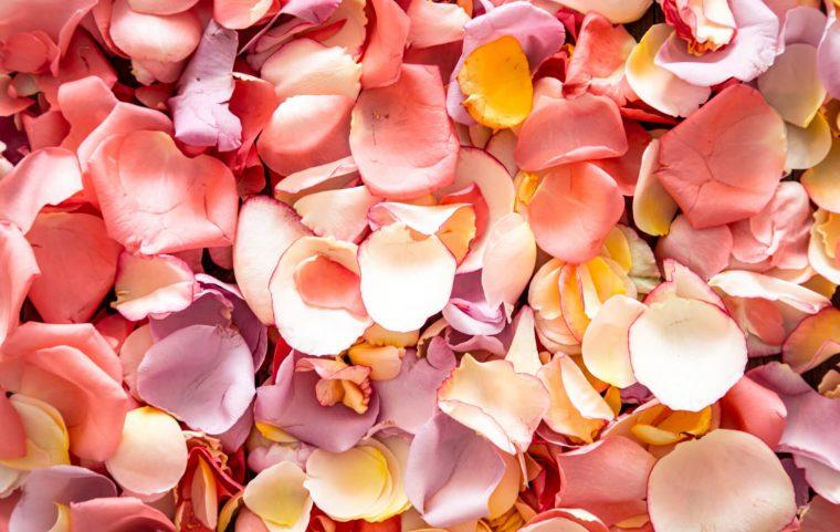 qué se puede hacer con pétalos de rosa