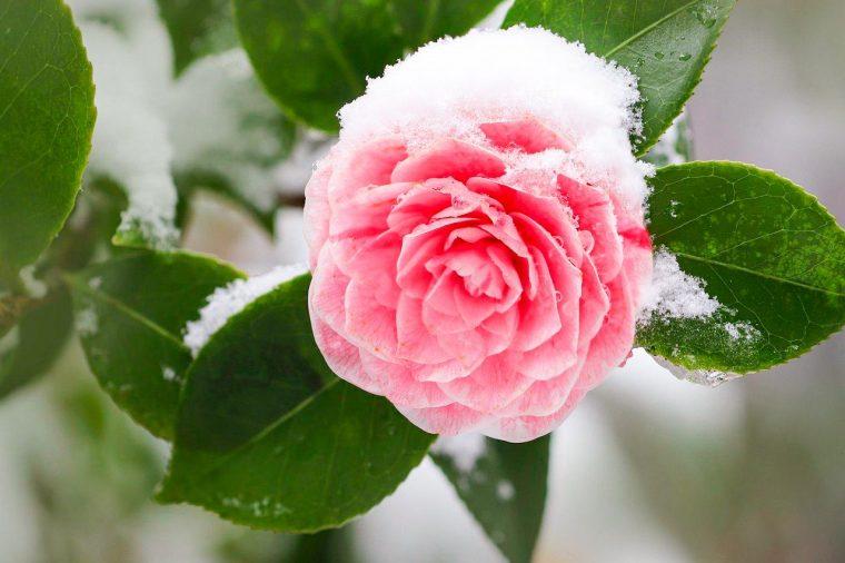 tipos flores de invierno